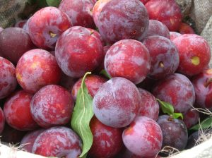 Close up Plums
