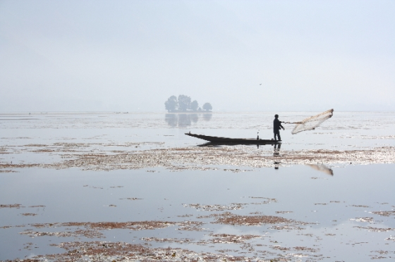 Casting a Net on Dal lake